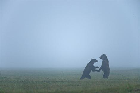 bears-russia-1198140-ga